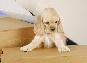 Tip for Moving with Your Canine Friend2